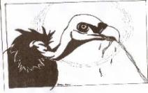"Inspired By ""Buzzards"" drawn by Schuylkill County Artist Bill Fisher"